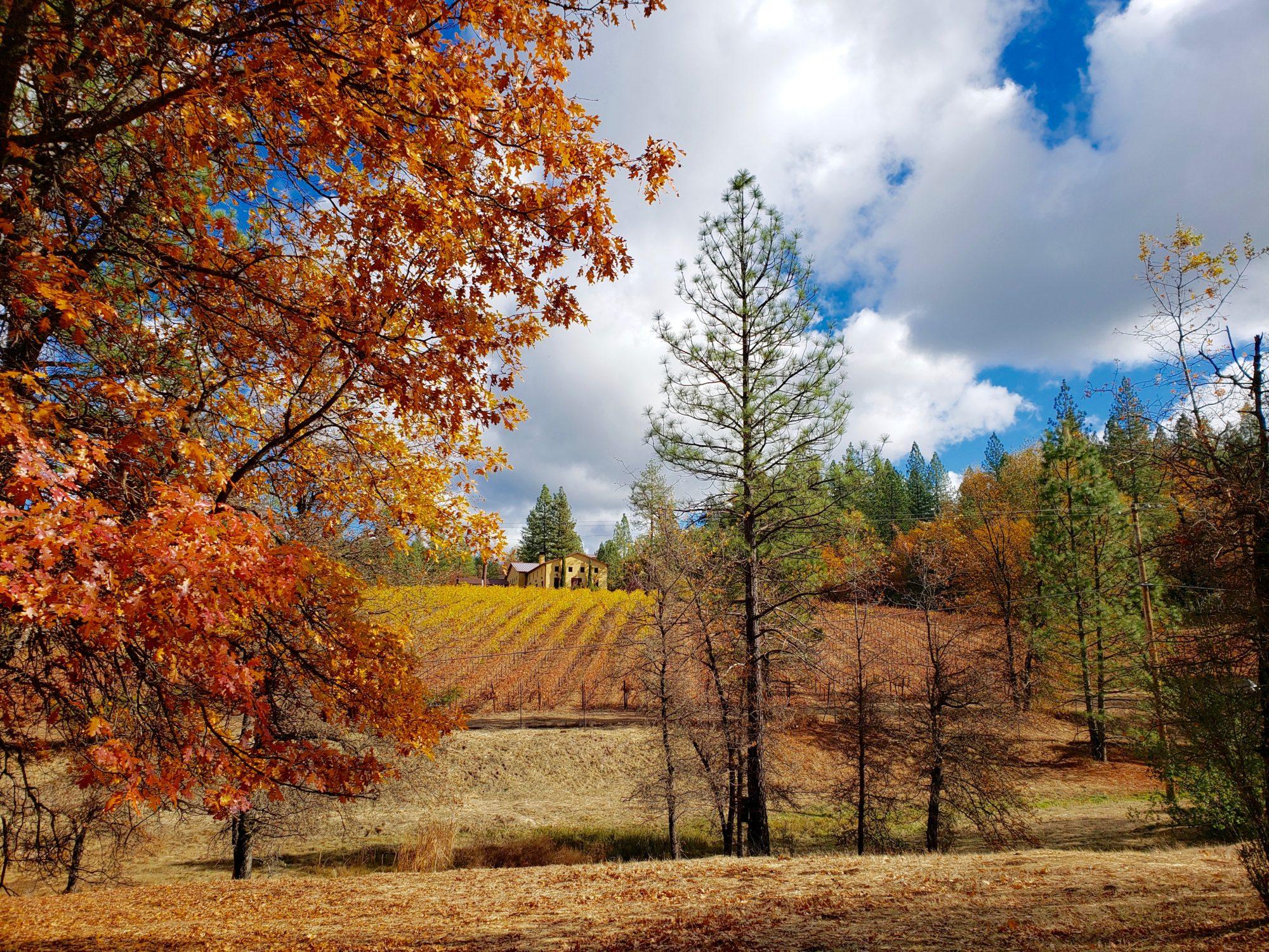 Fall at Miraflores Winery